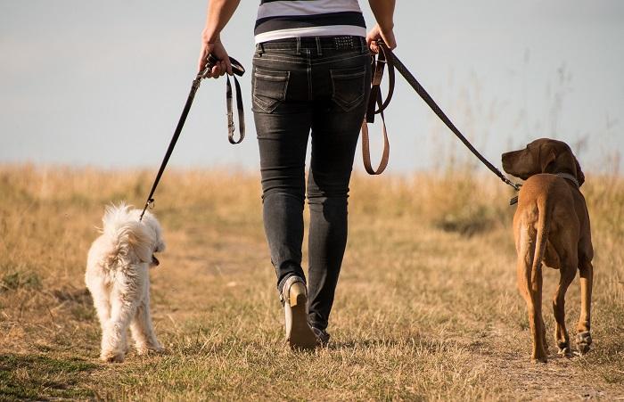 Vodítko pre psa si zamilujete