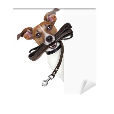 Vodítko pre psa a jeho cena